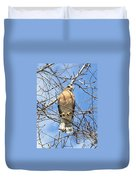 Red Shouldered Hawk In Tree Duvet Cover
