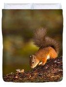 Red Squirrel In Autumn Duvet Cover
