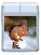 Red Squirrel Portrait Duvet Cover