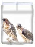 Red Tail Hawk Pair On White Background Duvet Cover