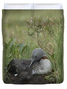 Red-throated Loon With Chick On Nest Duvet Cover
