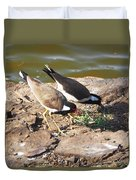 Red-wattled Lapwing Duvet Cover