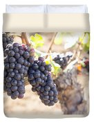 Red Wine Grapes Growing On Old Grapevine Duvet Cover
