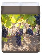Red Wine Grapes Hanging On Grapevines Duvet Cover