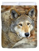 Red Wolf Portrait Duvet Cover