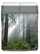 Redwood Forest With Sunbeams Duvet Cover