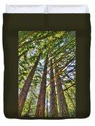 Redwoods 3 Big Basin Duvet Cover