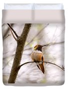 Regal Rufous Hummingbird Sitting Duvet Cover