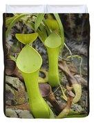 Reinwardts Pitcher Plant Sarawak Borneo Duvet Cover