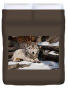 Resting Timber Wolf Duvet Cover