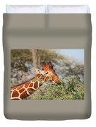 Reticulated Giraffe Browsing Acacia Kenya Duvet Cover
