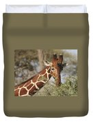 Reticulated Giraffe Feeding On Acacia Duvet Cover