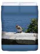 Rhode Island Squirrel Duvet Cover