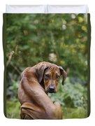 Rhodesian Ridgeback Puppy Duvet Cover