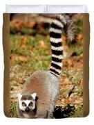 Ring-tailed Lemur Lemur Catta Walking Duvet Cover