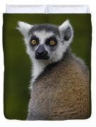 Ring-tailed Lemur Portrait Madagascar Duvet Cover