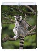 Ring-tailed Lemur Sitting Madagascar Duvet Cover