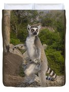 Ring-tailed Lemur Standing Madagascar Duvet Cover