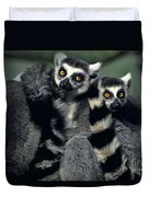 Ringtailed Lemurs Portrait Endangered Wildlife Duvet Cover