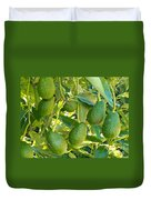 Ripe Avocado Fruits Growing On Tree As Crop Duvet Cover