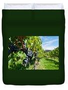 Ripe Grapes Right Before Harvest In The Summer Sun Duvet Cover