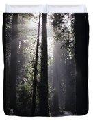 Road Through Redwoods Duvet Cover