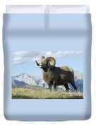 Rocky Mountain Big Horn Sheep Duvet Cover by Bob Christopher