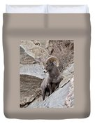 Rocky Mountain Big Horn Sheep Ram Duvet Cover