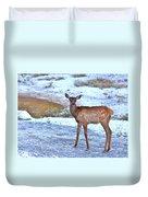 Rocky Mountain Elk Calf Duvet Cover