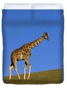 Rothschild Giraffe  Duvet Cover