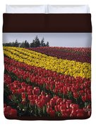 Rows Of Multicolored Tulips In Field Mount Vernon Washington Sta Duvet Cover