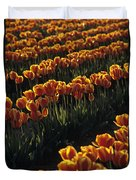 Rows Of Orange Tulips In Field Mount Vernon Washington State Usa Duvet Cover