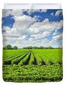 Rows Of Soy Plants In Field Duvet Cover by Elena Elisseeva
