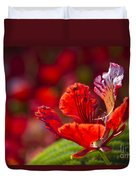 Royal Poinciana - Flamboyant - Delonix Regia Duvet Cover