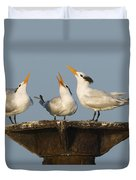 Royal Tern Trio Displaying Dominican Duvet Cover