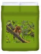 Rufous Morph Costa Rican Pygmy-owl Duvet Cover by Tony Beck