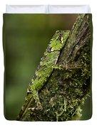 Sabah Eyebrow Lizard Mt Kinabalu Np Duvet Cover by Ch'ien Lee