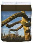 Saguaro Cacti Saguaro Np Arizona Duvet Cover