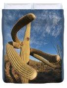 Saguaro Cactus Saguaro Np Arizona Duvet Cover