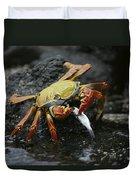 Sally Lightfoot Crab Feeing Galapagos Duvet Cover
