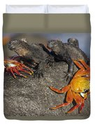 Sally Lightfoot Crabs And Marine Duvet Cover