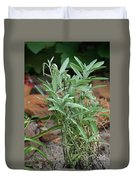 Salvia Officinalis Sage Duvet Cover