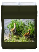 Sandhill Crane Chicks  Duvet Cover