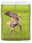 Sandhill Cranes Walking Around Duvet Cover