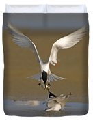 Sandwich Tern Bringing Fish To Its Mate Duvet Cover