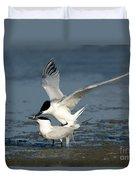 Sandwich Terns Mating Duvet Cover