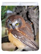 Saw-whet Owl In Conifers Duvet Cover
