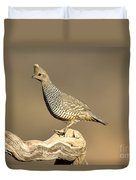 Scaled Quail Callipepla Squamata Duvet Cover
