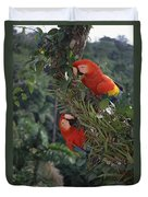 Scarlet Macaws In Rainforest Canopy Duvet Cover