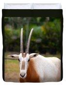 Scimitar Horned Oryx 2 Duvet Cover